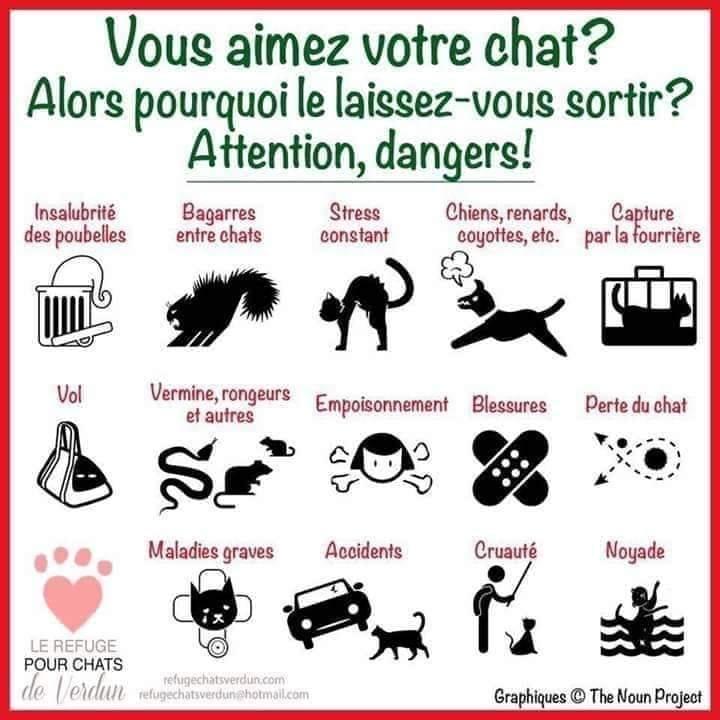 DANGER pour chat